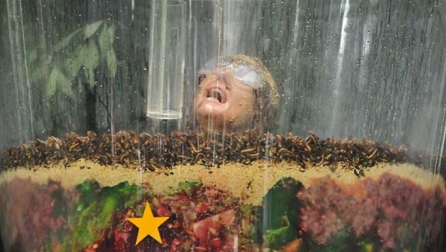 Tapfer erkämpfte Hanka bei ihrer letzten Dschungelprüfung alle Sterne. (Bild: RTL)
