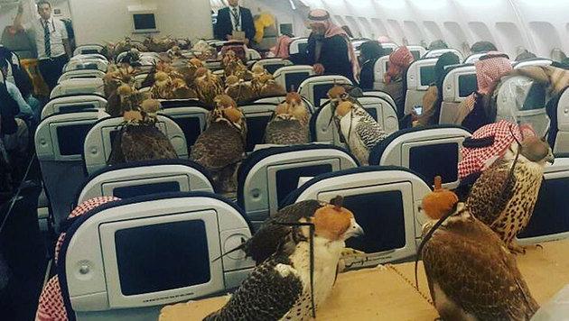 Saudischer Prinz sitzt mit 80 Falken im Flugzeug (Bild: reddit.com/lensoo)