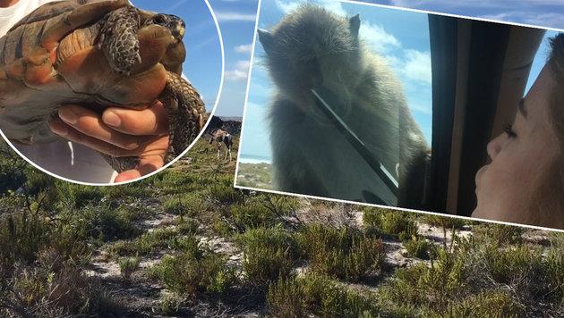Bussi für Affen: Wellenreiter erkunden Kapstadt (Bild: Max Matissek)
