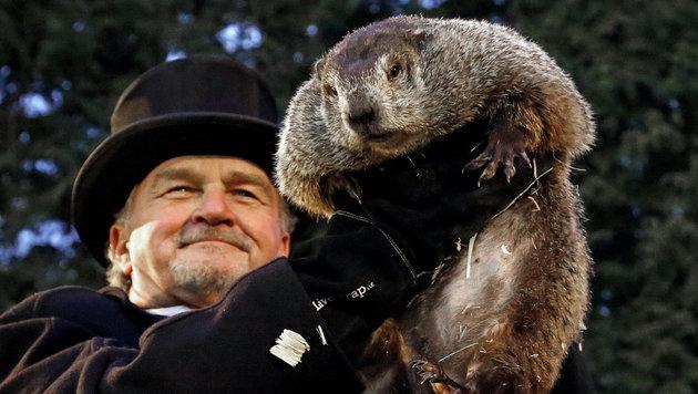 USA: Murmeltier Phil sagt langen Winter voraus (Bild: Associated Press)