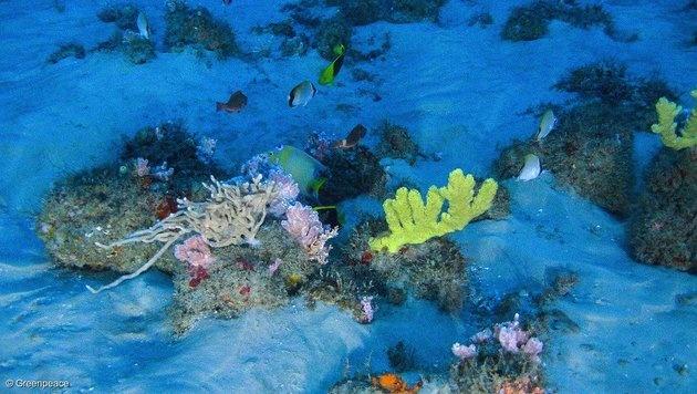 Riff in Mündung des Amazonas gibt Rätsel auf (Bild: twitter.com/greenpeace)