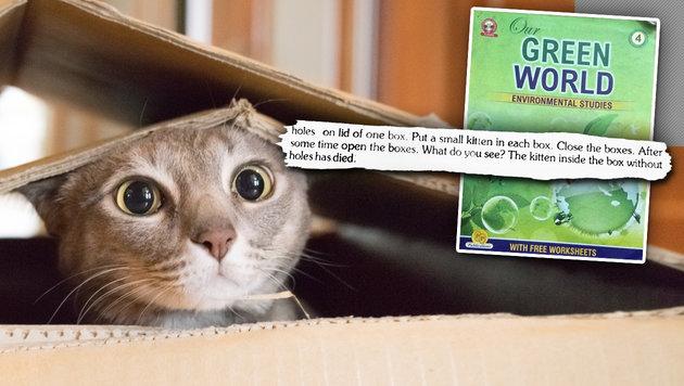 Indien: Schulbuch lehrt, wie man Katzen erstickt (Bild: twitter.com, thinkstockphotos.de)