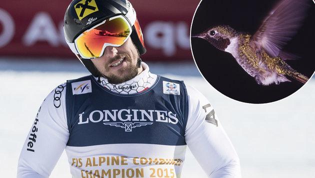 """Hirschers """"Rückstand"""": Flügelschlag eines Kolibris (Bild: AP)"""