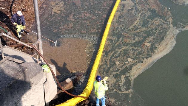 Lokalaugenschein im Hafen: Dort schwimmt noch immer das Öl! (Bild: Andi Schiel)