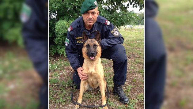"""Polizeihund """"Anuk"""" brachte die Beamten auf die Spur des Sextäters. (Bild: LPD NÖ)"""