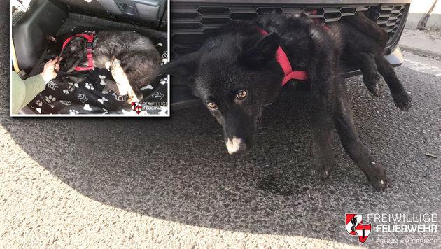 Hund bei Autounfall in Fahrzeugfront eingeklemmt (Bild: Freiwillige Feuerwehr Brunn am Gebirge)