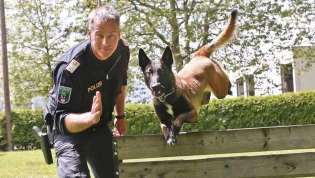 """Diensthundeführer Johann Loidl und seine Hündin """"Kiara"""" beim Training, immer voll konzentriert. (Bild: Markus Tschepp)"""