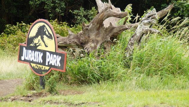 """Kong"": Monsterjagd auf ""Skull Island"" (Bild: Ingemar Pardatscher)"