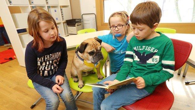 """Mischling """"Speedy"""" bringt Kindern das Lesen bei (Bild: Juergen Radspieler)"""