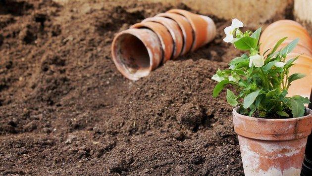 In der Regel kann man Pflanzen nach den Eisheiligen im Mai wieder ins Freie setzen. (Bild: flickr.com/84437810@N02)