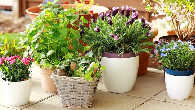 Gartenpflege: So blühen Balkon und Terrasse auf (Bild: thinkstockphotos.de)