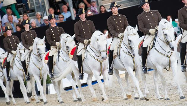 Die weißen Lipizzaner der Wiener Hofreitschule (Bild: APA/EXPA/MICHAEL GRUBER)