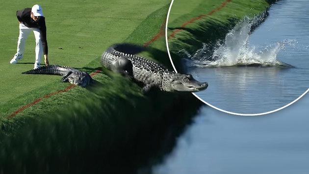 Cooler US-Golfer scheucht Alligator vom Platz (Bild: YouTube.com)