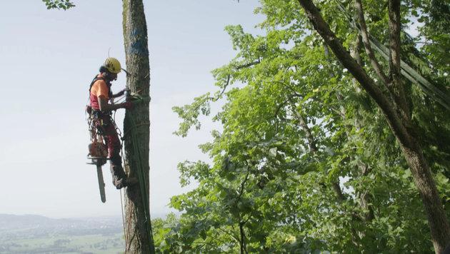 Sie sind Kletterer, Hubschrauberpiloten und Baumpfleger: die sogenannten Holzer (Bild: ServusTV / tellvision)