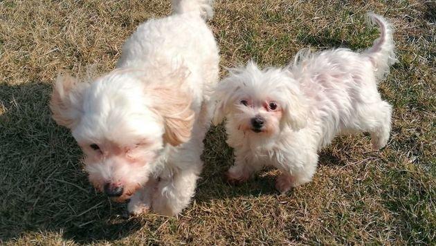 Puppi und Schlumpfi (Bild: zVg)