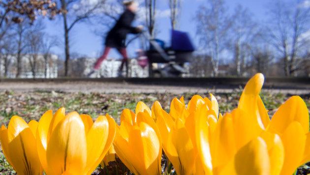 Der Frühlingsbeginn bringt endlich wärmere Tage (Bild: APA/dpa/Soeren Stache)