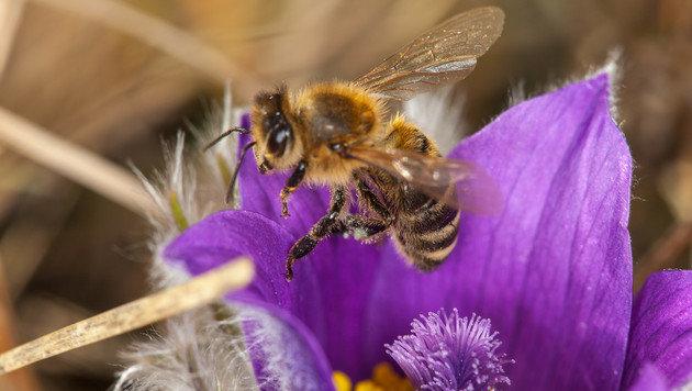 Wir suchen Ihre schönsten Frühlingsfotos! (Bild: Andrea Köhbach)