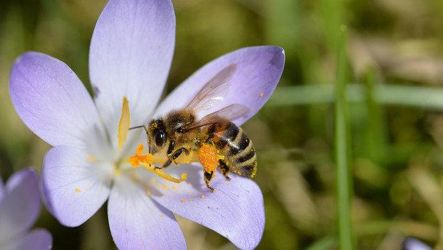 Wir suchen Ihre schönsten Frühlingsfotos! (Bild: Egon Weissheimer)