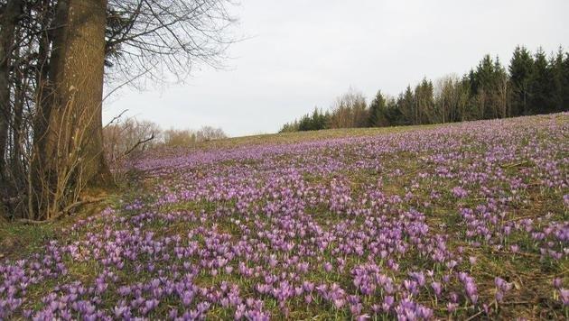 Wir suchen Ihre schönsten Frühlingsfotos! (Bild: Rudolf Kössel)