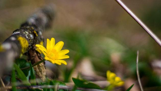 Wir suchen Ihre schönsten Frühlingsfotos! (Bild: Stefan Steiner)