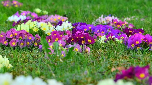 Wir suchen Ihre schönsten Frühlingsfotos! (Bild: Silvia Jörg)