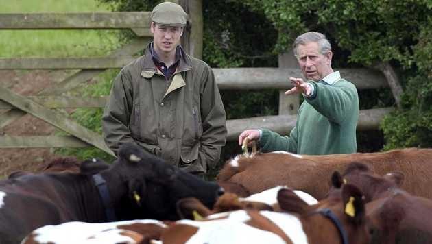 Prinz Charles und Prinz William auf der Kuhweide (Bild: Viennareport)