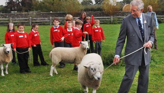 Prinz Charles beim Schafehüten (Bild: Viennareport)