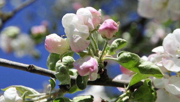 Wir suchen Ihre schönsten Frühlingsfotos! (Bild: Herta Kern)