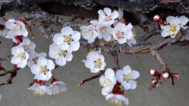 Wir suchen Ihre schönsten Frühlingsfotos! (Bild: Margit Schadler)