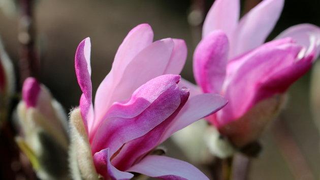 Wir suchen Ihre schönsten Frühlingsfotos! (Bild: Caro Guttner)