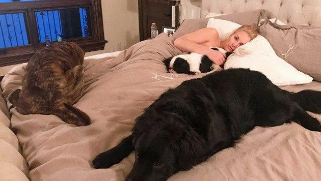 Tierisches Bettgeflüster: Lindsey Vonn kuschelt mit drei Hunden im Schlafgemach. (Bild: Instagram)
