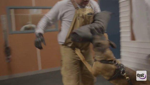 Spezielles Training für künftige US-Militärhunde (Bild: Department of Defense)