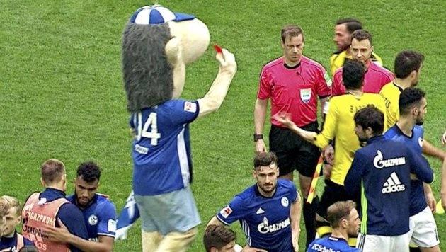 Schalke-Maskottchen kommt mit blauem Auge davon (Bild: twitter.com)