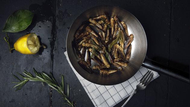 """""""Wiener lädt monatlich zum Insekten-Dinner (Bild: Dominik Geider)"""""""