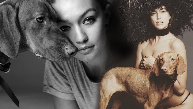 """Hund """"Red"""" kennt die angesagtesten Models der Welt. (Bild: instagram.com/redmackey)"""