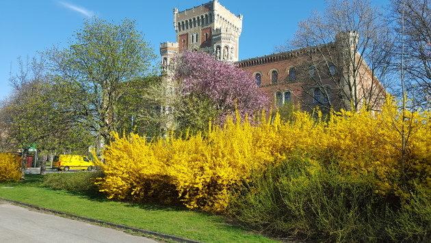 Wir suchen Ihre schönsten Frühlingsfotos! (Bild: Stefan Macho)
