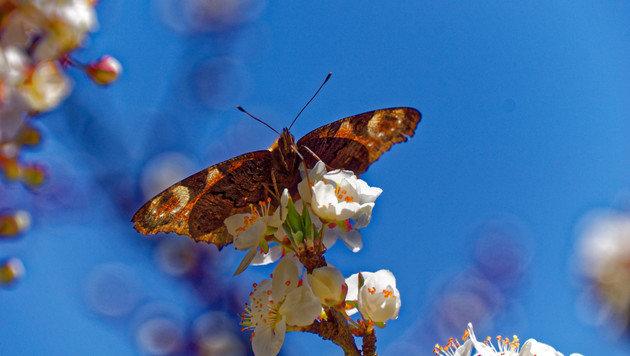 Wir suchen Ihre schönsten Frühlingsfotos! (Bild: Mario Waltl)