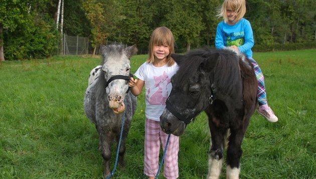 Bei dem Zoo-Rundgang am Mittwoch in Walding dürfen viele der Tiere auch gefüttert werden (Bild: unbekannt)
