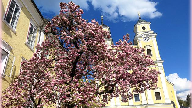 Wir suchen Ihre schönsten Frühlingsfotos! (Bild: Christa Katharina)
