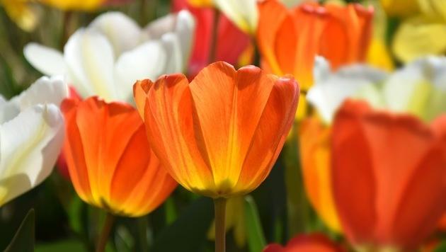 Wir suchen Ihre schönsten Frühlingsfotos! (Bild: Markus Jerko)
