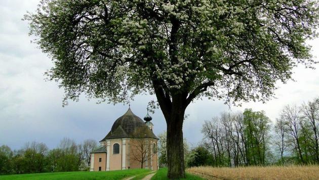 Wir suchen Ihre schönsten Frühlingsfotos! (Bild: Christa Posch)