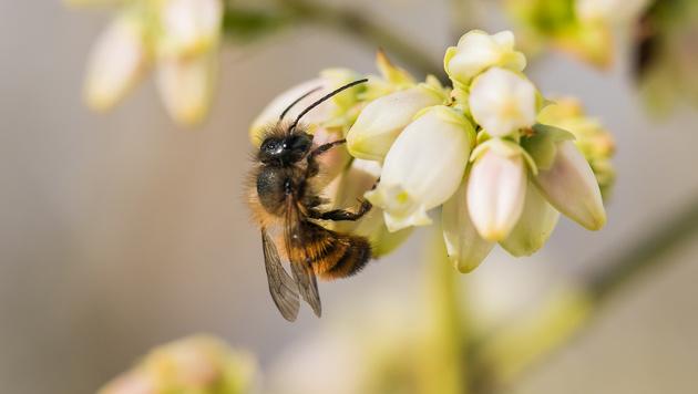 Wir suchen Ihre schönsten Frühlingsfotos! (Bild: Leserreporter Oliver Wallner)