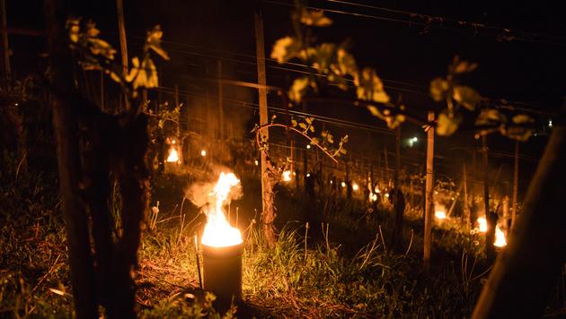 Obst- und Weinbauern rüsten sich vor Frosteinbruch (Bild: APA/KEYSTONE/GIAN EHRENZELLER (Symbolbild))