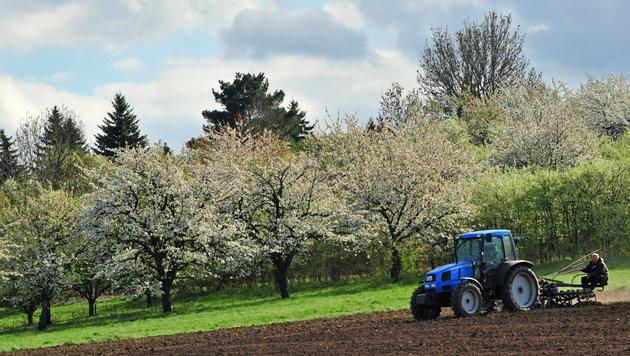 Obst- und Weinbauern rüsten sich vor Frosteinbruch (Bild: dpa-Zentralbild/Martin Schutt)