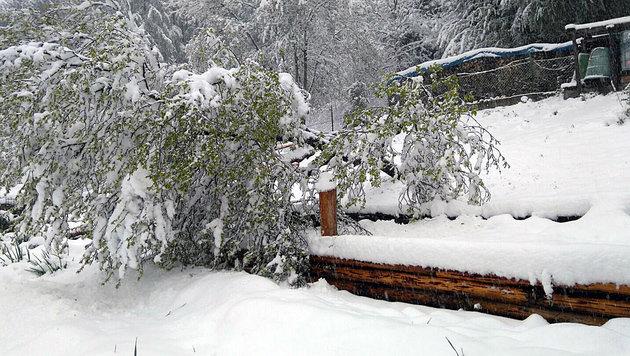 """Schneehölle: """"Die Straße wurde zur Todesfalle"""" (Bild: """"Krone""""-Leserreporter Christoph Schaffer)"""