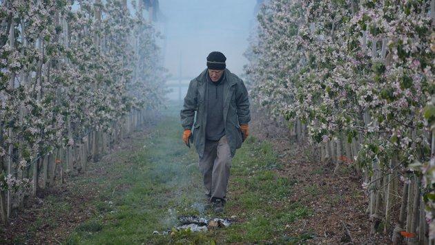 Bei Obstbauer Dietmar Kainz wurden in den Kulturen Heu, Stroh und Reisig entzündet (Bild: Georg Bachhiesl)