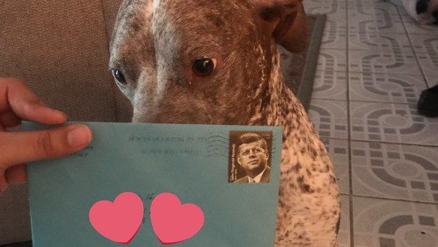"""""""Apollo"""" bekommt immer noch jedes Jahr Geburtstagsgeschenke von seinem Ex-Herrchen. (Bild: twitter.com/beckzlove)"""