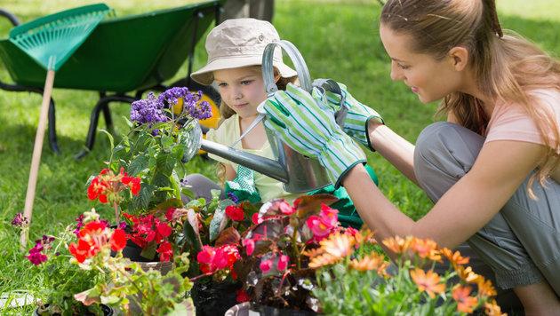 Tipps und Tricks für die Bewässerung von Pflanzen (Bild: thinkstockphotos.de)