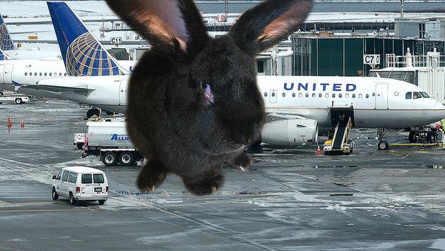 Rekord-Kaninchen stirbt auf United-Airlines-Flug (Bild: AP)