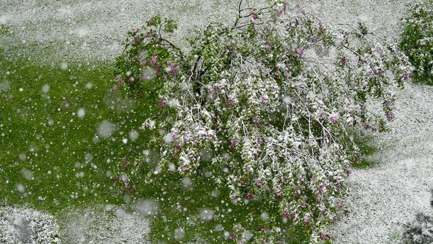 Das war der kälteste April seit neun Jahren! (Bild: APA/BARBARA GINDL)